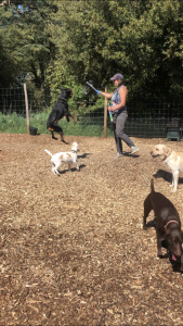 A person blows bubbles and four dogs chase bubbles.